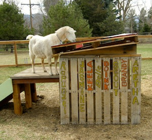 The roofing material was VERY interesting to Brandy. (Note slat without a name...we took that to mean the barnyard needs one more resident!)