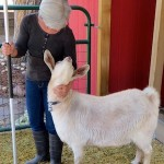 SWG (Single White Goat) Seeks Same