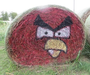 Now that's an Angry Bird!
