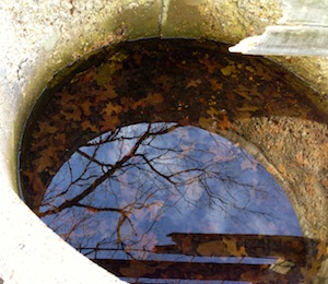 And a concrete bowl, with leaves both in and reflected from above.
