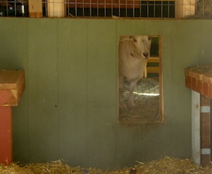 It's like a goat and chicken clubhouse.  No pigs allowed!