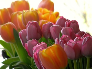 Tulips graced the tables.
