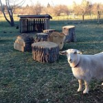 More Fun For Goats – Again!